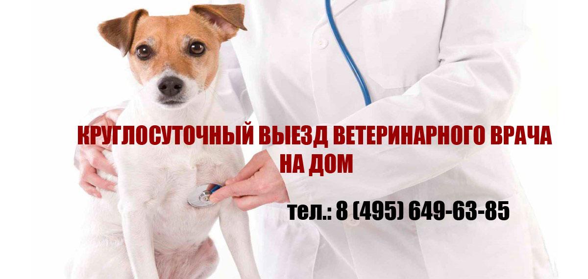 Детская поликлиника газпром регистратура